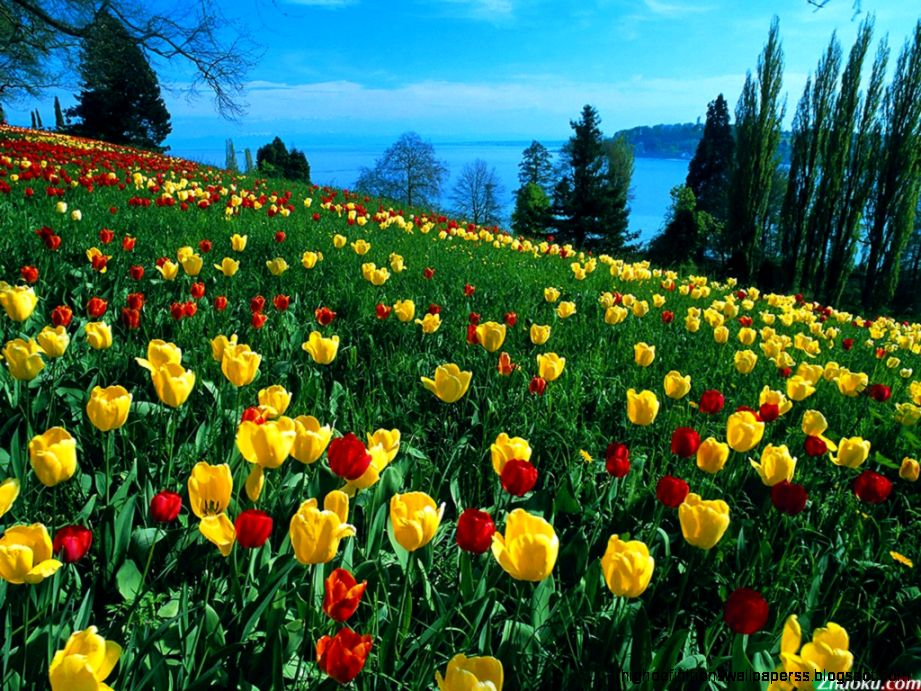 Nature Scenery Flowers Pictures, Images & Photos | Photobucket