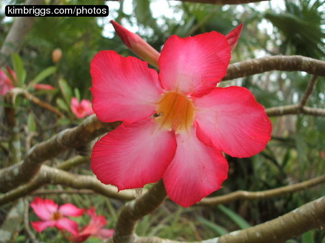 Exotic tropical flowers photos
