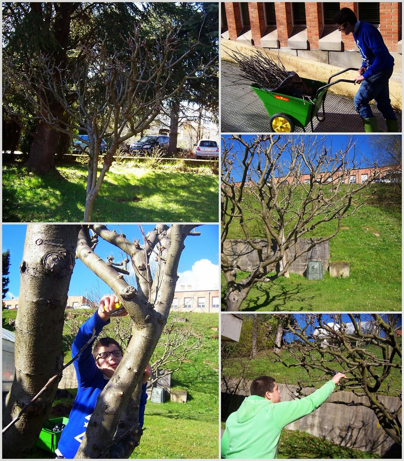 C e e ngel de la guarda aspace asturias poda aula de for Guarda herramientas para jardin