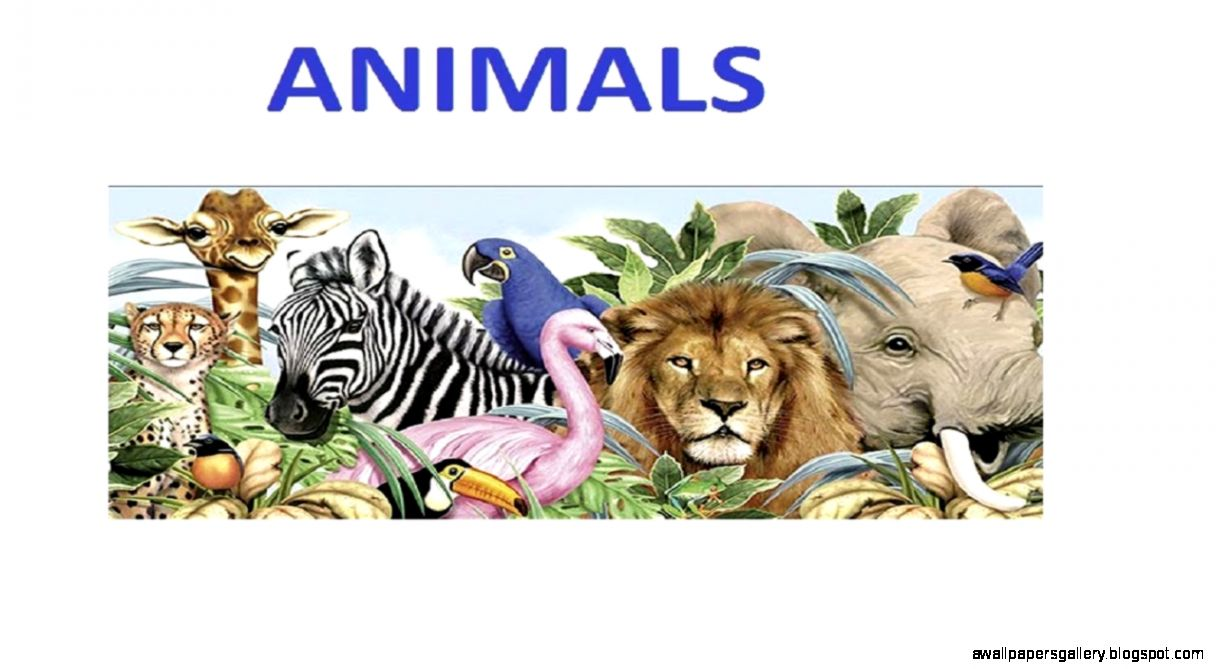 Learn the Animals - Apps on Google Play
