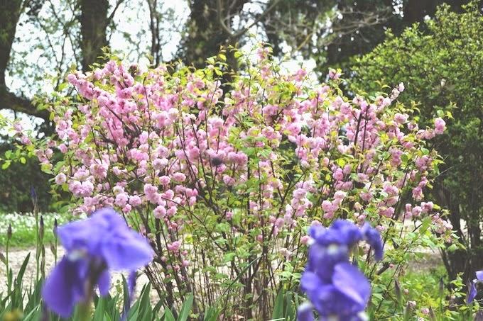Primavera en Provenza