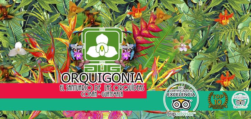 Orquigonia  El Santuario de las Orquídeas de Guatemala