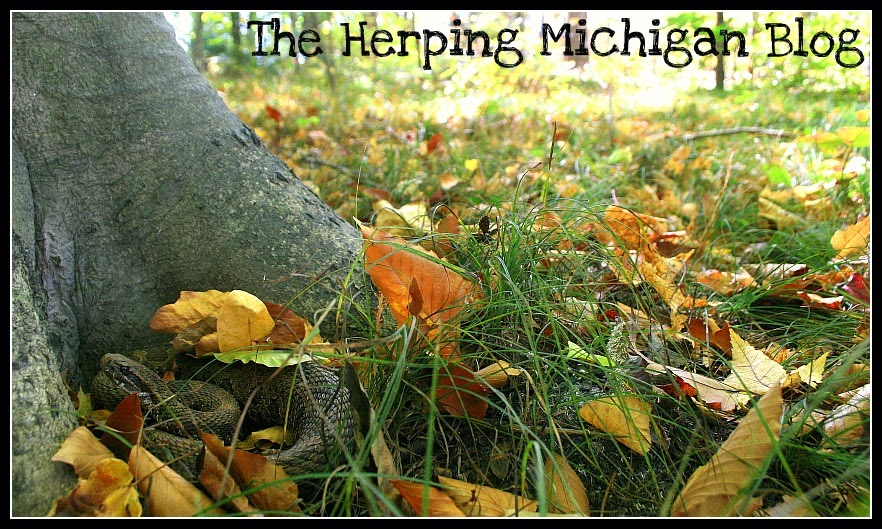The Herping Michigan Blog
