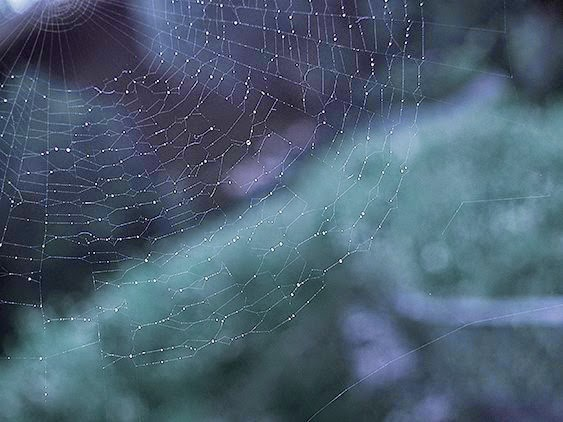 spider web droplets