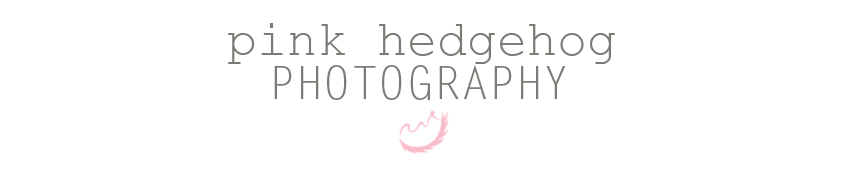 Pink Hedgehog Photography