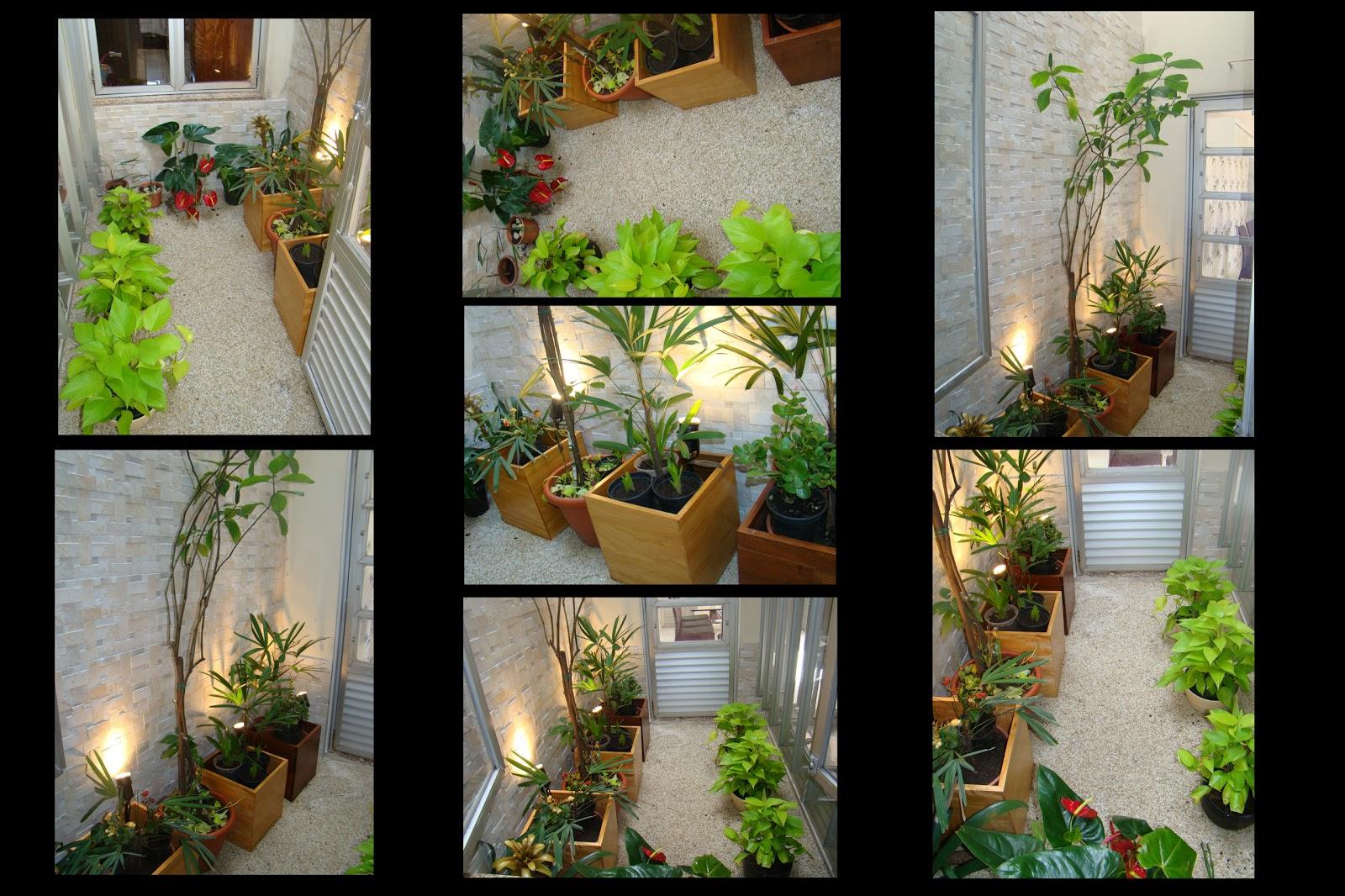 flores para jardim de inverno:jardim de inverno para cultivar plantas maravilhosas dentro de casa 04