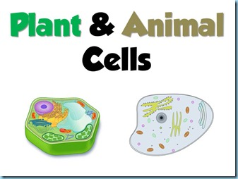 Animal cell model diagram project parts structure labeled coloring animal and plant cell animal cell model diagram project parts structure labeled coloring and plant cell organelles cake ccuart Gallery