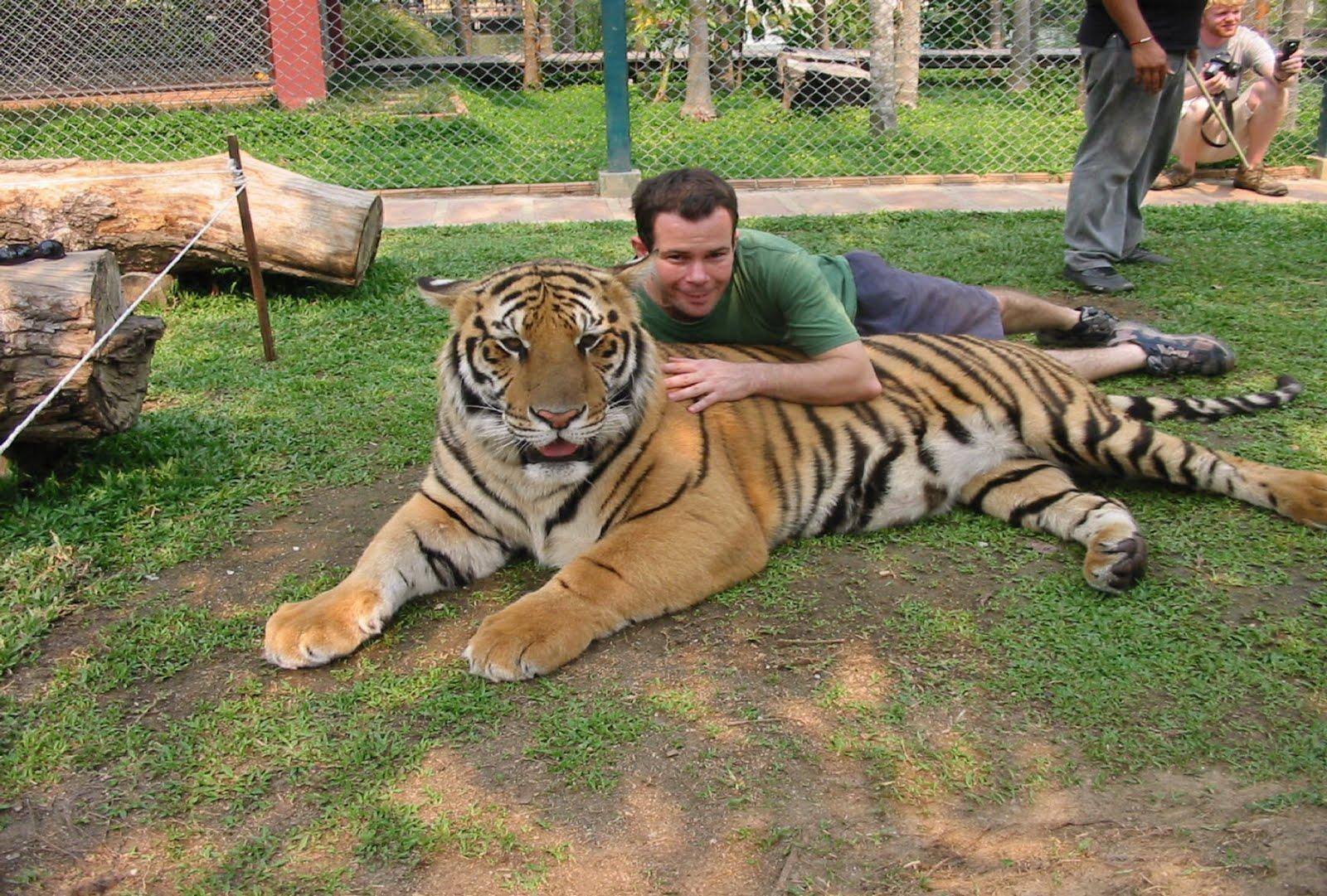 Nice little Tiger