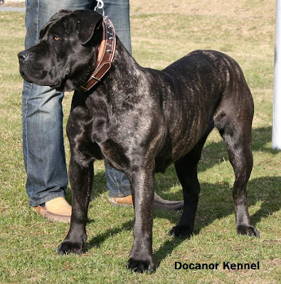 kelvin black: Most Dangerous Dogs Breed