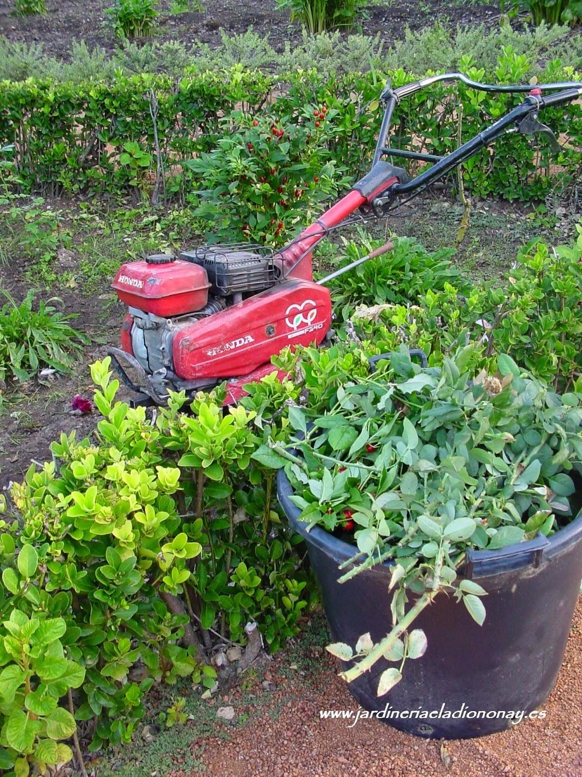Jardineria eladio nonay mantenimiento del jard n en - Jardineria eladio nonay ...