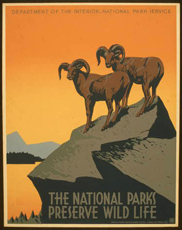wpa, animal poster, nature, wildlife, national park, federal art project, vintage, travel, travel posters, vintage posters, retro prints, classic posters, graphic design, free download, The National Parks Preserve Wild Life - Vintage WPA Animal Nature Travel Poster