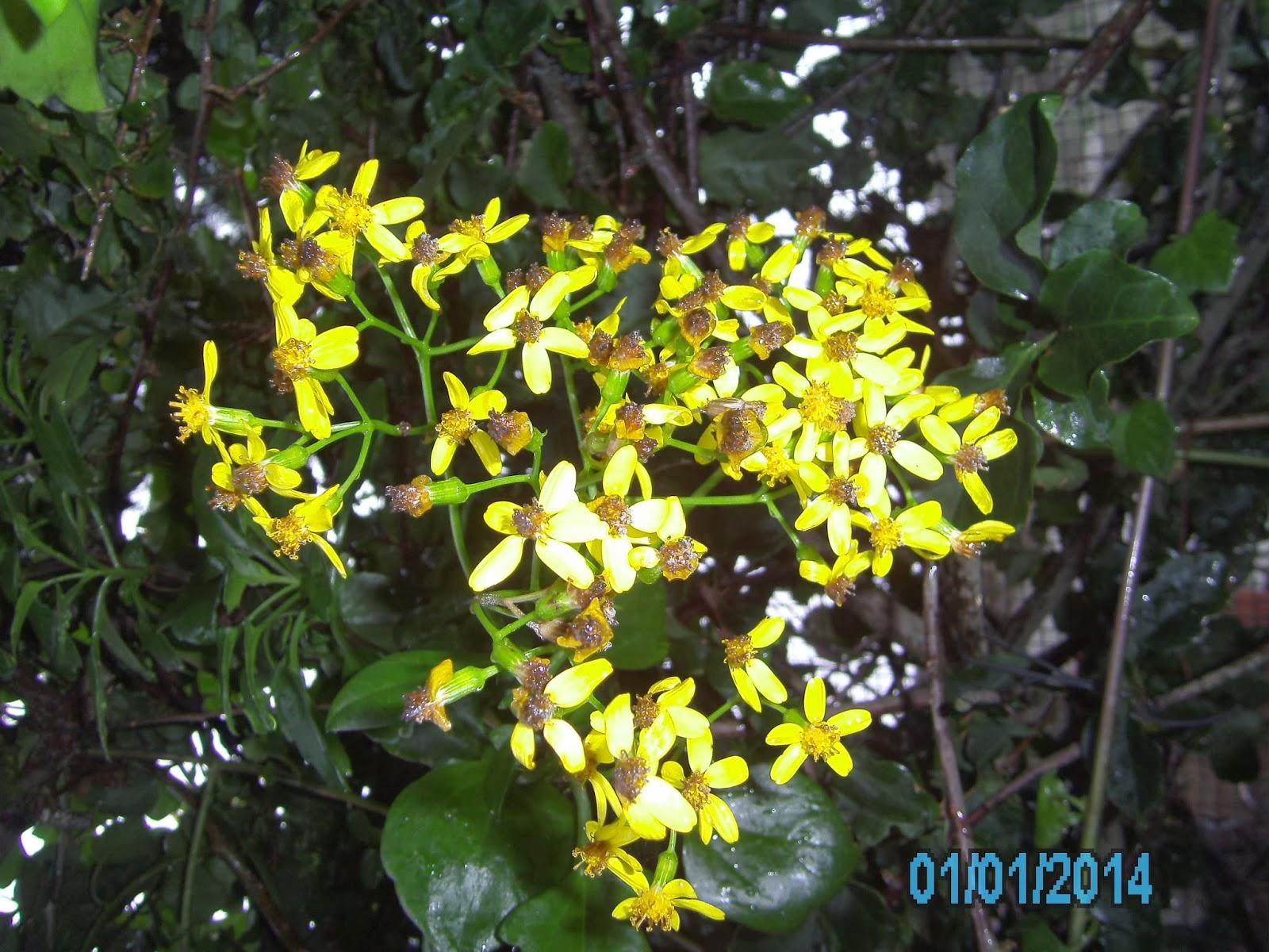 flor de jardim amarela:Enviar a mensagem por e-mail Dê a sua opinião! Partilhar no Twitter