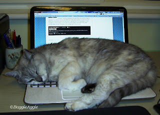 Crazy cat fast asleep on laptop keyboard.