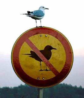 seagull sits on no seagulls sign