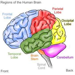 4 Makanan Terbaik untuk Otak