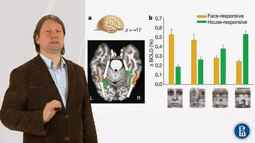 Introducción a la neuroeconomía (MOOC)