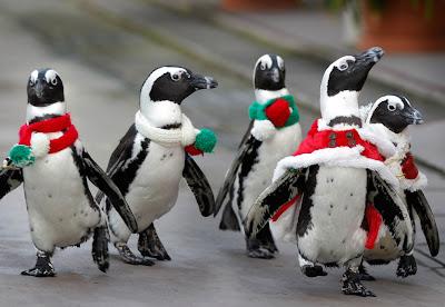 Pingüinos con bufanda