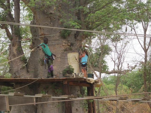 IMG_3313 ▷ La Reserva de Bandia y Accro Baobab Adventures