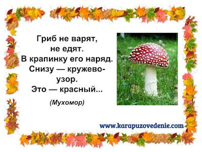 загадки про грибы мухоморы для детей с ответами в картинках