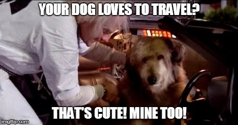 cute-dog-travel