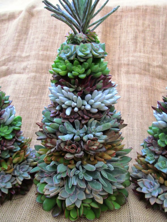 1000 Images About Succulent Crafts On Pinterest
