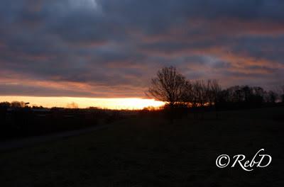 träd mot balgrund av soluppgång i horisonten. foto: Reb Dutius