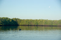 Mangroves, Pelican and Moon at Black Turtle Cove