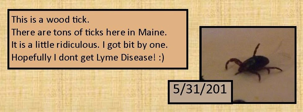 May 31, 2014 Wood tick
