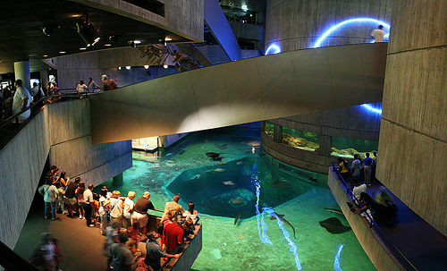 Redefining The Face Of Beauty Top 5 Aquariums In America