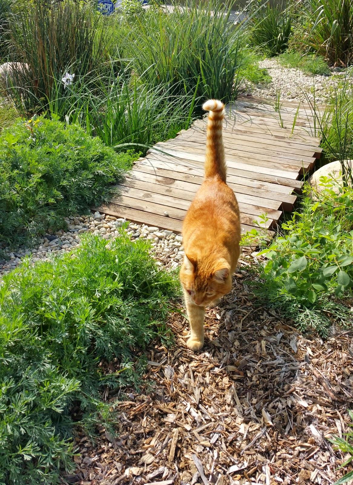 mar vista green garden showcase 3967 coolidge avenue cluster 1f