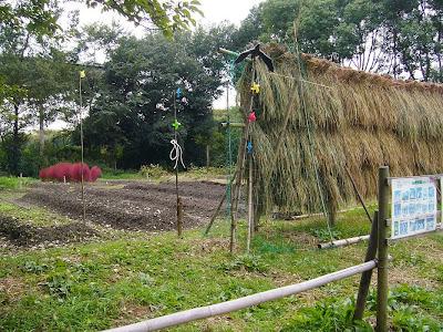 万博公園 伝統野菜 畑