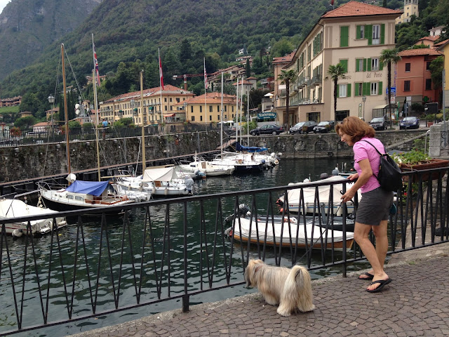 Rocco Havanese Menaggio harbor dog friendly Italy