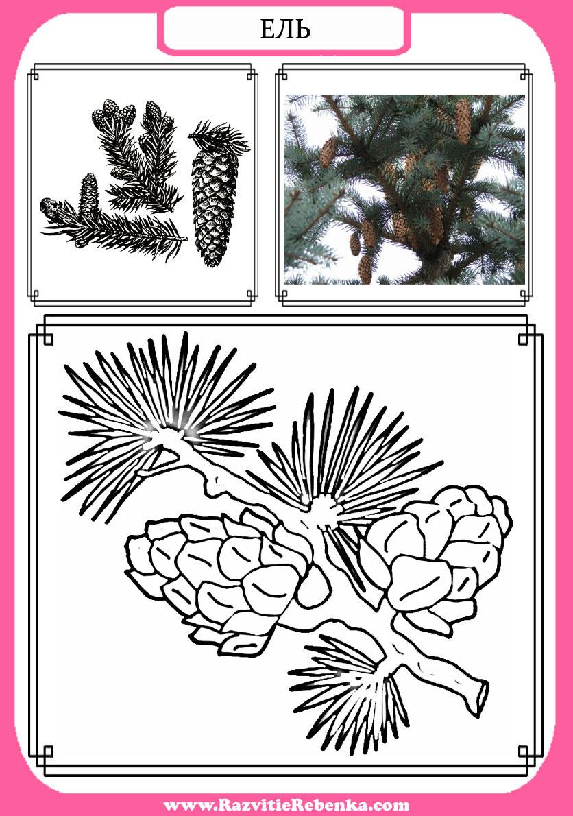 Деревья весной картинки с названиями для детей