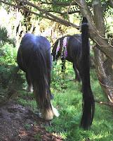 Pony tail plug