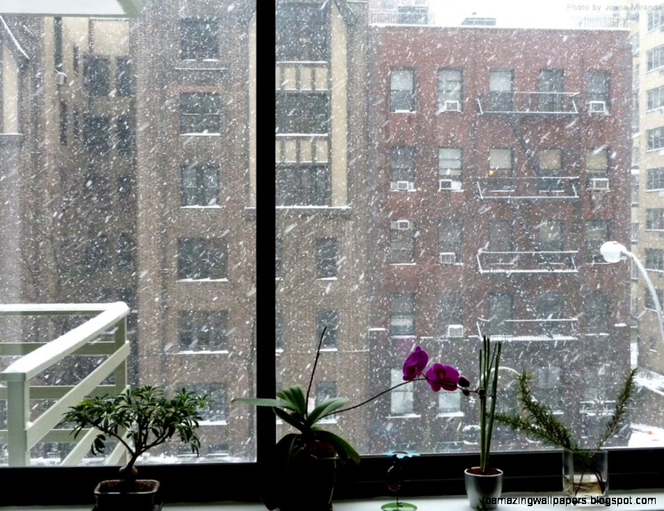 view from Upper West Side apartment window  JOANA MIRANDA STUDIO