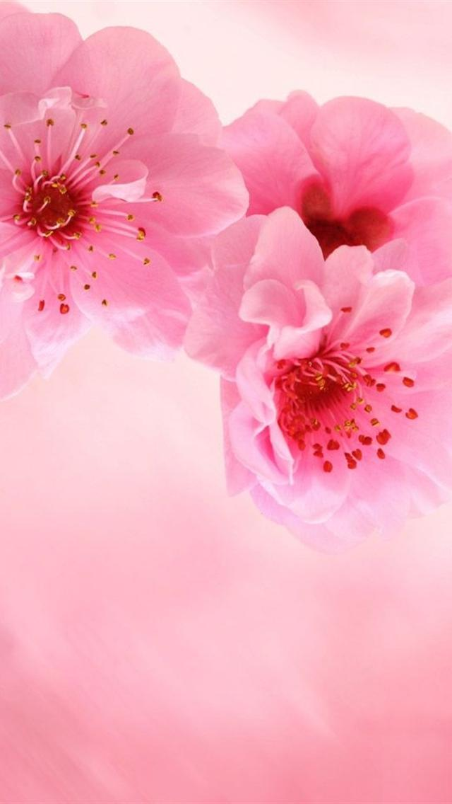 iphone 5 wallpapers hd cute pink flowers iphone 5 background