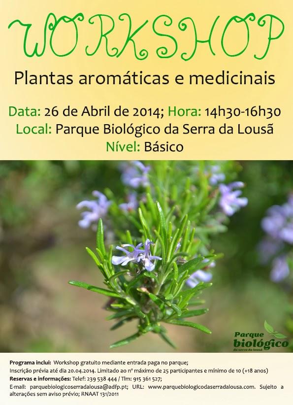 Estudo e produ o de pam no interior workshop plantas - Plantas aromaticas interior ...