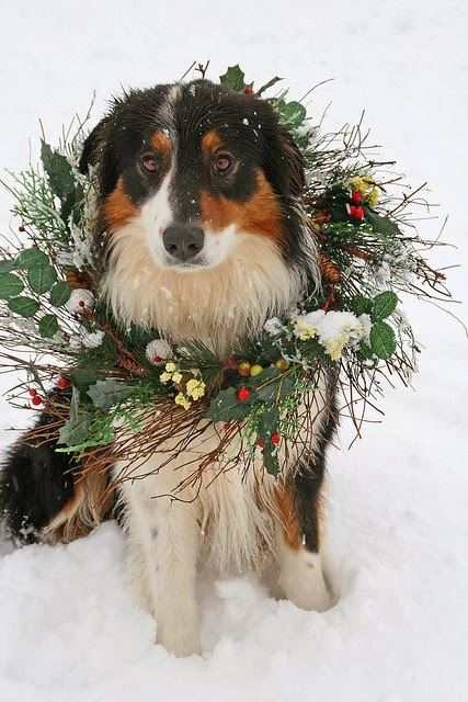 Cutest Dog Christmas Photos