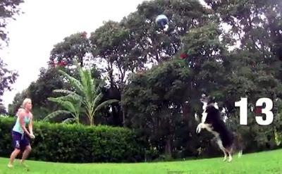 バレーボール犬