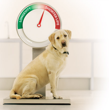 Dog Diets for Weight Loss Tips and Program