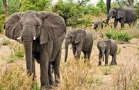 Wild elephants enter residential areas near Hosur