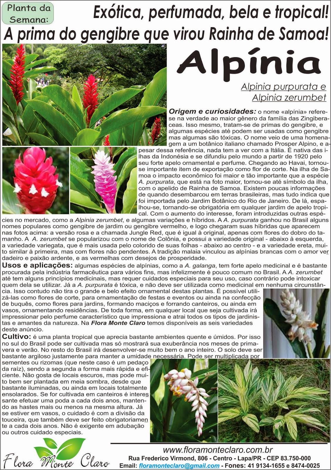 Planta da Semana - Alpínia