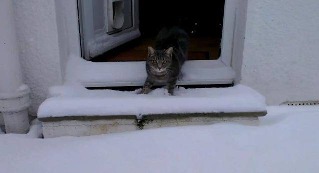 Gato tem primeiro contato com a neve