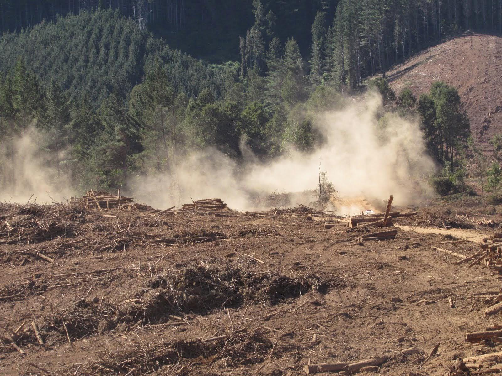 Fundo de la Forestal Arauco-Valdivia, Territorio Ancestral de la Comunidad Mapuche de Lumaco, Lanco