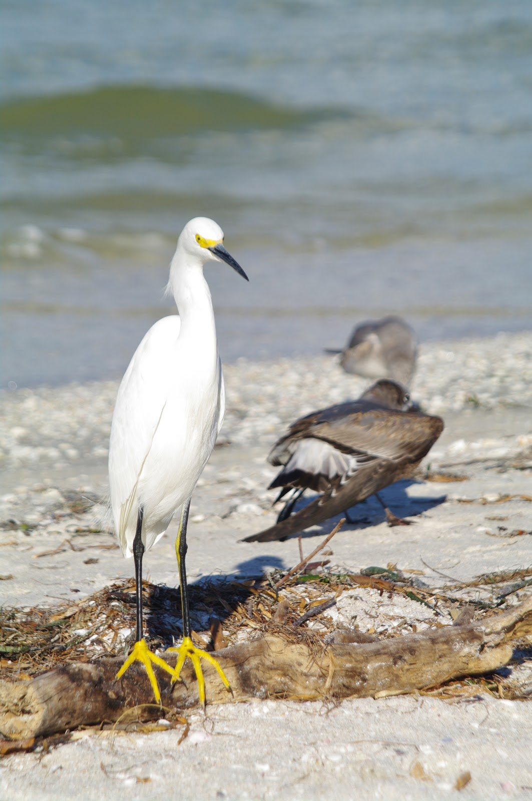 Tours On Sanibel Island A Land Remembered