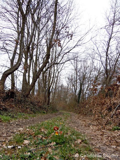 fata nel bosco