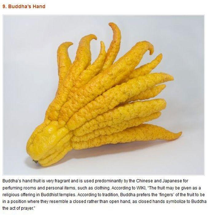 Strange Foods - Photos With Wiki