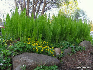 Woodland,Trädgårdslund
