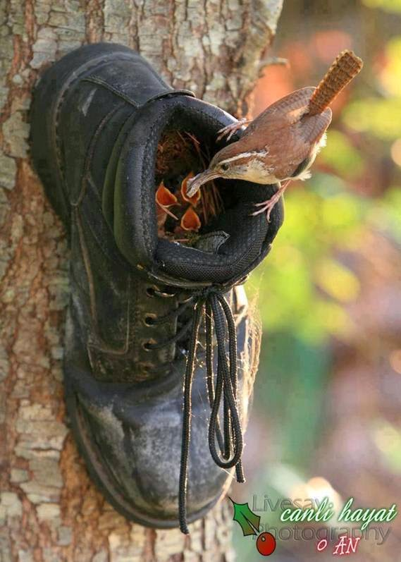 Old Shoe Nailed to a Tree