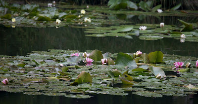 (France) – Giverny  Garden